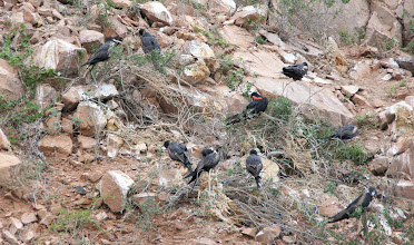 Photo: Birds resting on Isla Gallo
