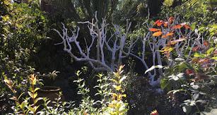 Almería cuenta con un total de cinco jardines botánicos repartidos por toda la provincia.