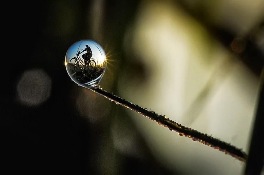 cycling in my dew by Kawan Santoso - Nature Up Close Natural Waterdrops (  )