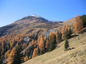 Photo: Weide in den Herbstfarben