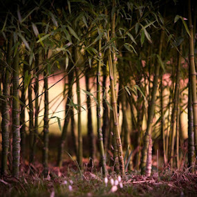 LandOfBamboo by Alex Newstead - Nature Up Close Other plants ( fantasy, plant, colour, bamboo, fairies, nature, sunset, fairy, garden, world )