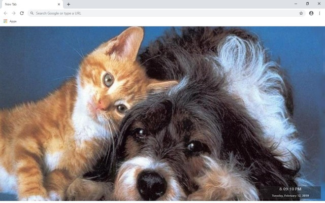 Cats & Dogs New Tab & Wallpapers Collection