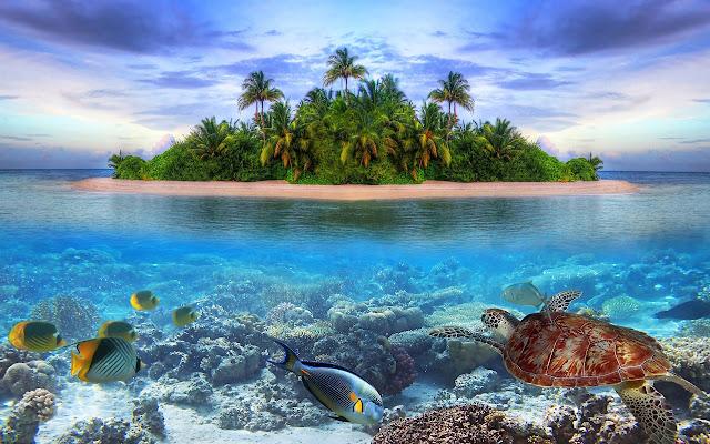 Ocean Tab