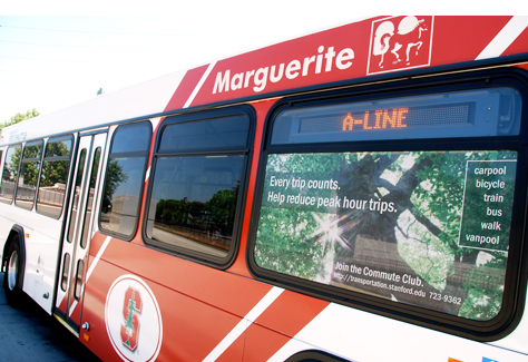living_marguerite.jpg