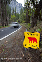 Photo: Watch Out For Bears, Speeding Kills Bears If you've ever traveled through Yosemite National Park and seen this sign it means a bear had been hit there. It's a sad reminder that bears and other animals pay the price for our obsession with time and schedule. Always amazing to see the bear statistics via the Yosemite National Park page http://www.nps.gov/yose/planyourvisit/bearfacts.htm
