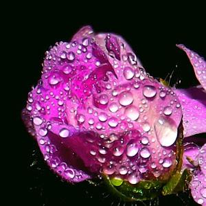 flower  Aug 19 2013109.jpg