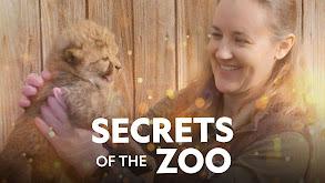 Secrets of the Zoo thumbnail