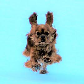 Running dog by Camilla Uddgren - Animals - Dogs Playing ( dogs running, dog playing, dog )