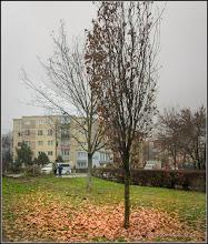 Photo: Calea Victoriei, Mr.3 - spatiu verde intre blocuri - 2017.11.25