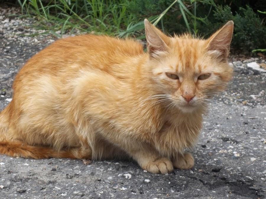 Котка by Georgi Kolev - Animals - Cats Portraits ( треви., слънце., котка., път., ден. )