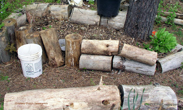 Photo: Old logs are used for raised beds. As the logs decompose, they add nutrients to the soil. They also hold moisture for the growing plants to draw. Green plant is a European perrenial garden plant called Corn Salad.CC