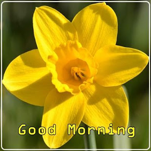 good morning flowers apps on google play