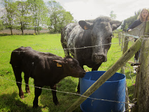 Photo: Een koe met haar kalfje