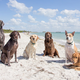 beach pack by Meaghan Browning - Animals - Dogs Portraits ( dogs, pack, beach, group, variety )