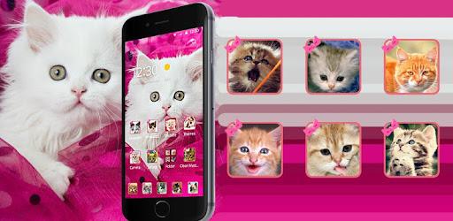 Pink Persian White Cat Theme Aplikasi Di Google Play