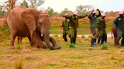 An elephant from the Zimbabwe Elephant Nursery gets down to 'Jerusalema' with staff.