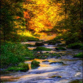 autumn light by Petr Klingr - Landscapes Waterscapes ( hdri, leaves, light, hdr, tree, river, autumn,  )