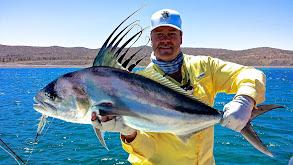 Salmon on Restigouche River thumbnail