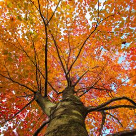 by Divya Ram - Nature Up Close Trees & Bushes