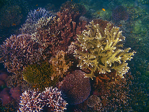 Photo: various kinds of staghorn coral