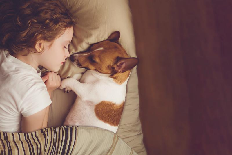 Kleinkind und Hund im Bett - Darf der Hund mit ins Bett?