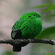 Cute Green Bird LWP Download for PC Windows 10/8/7