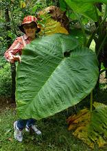 Photo: Sheila with big leaf