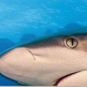 App Icon for Queensland Shark and Ray ID tool App in Czech Republic Google Play Store