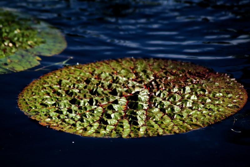 Il verde che galleggia di singi72