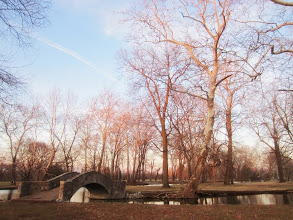 Photo: Valentine's Day sunset kissing the trees pink at Eastwood Park in Dayton, Ohio.
