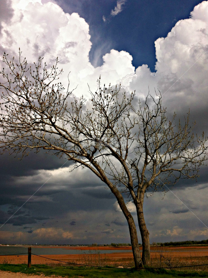 Cloud Tree in Full Bloom by Being Melissa - Novices Only Landscapes ( clouds, fine art prints, my beautiful oklahoma, oklahoma, cloud trees, trees, oklahoma photography, ansel adams, storm clouds, storm )