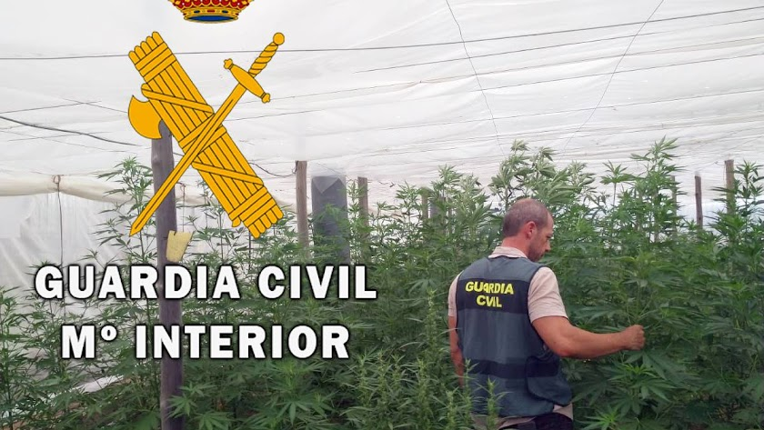 Cultivo del invernadero / Comandancia de la Guardia Civil