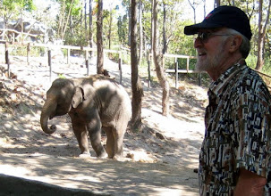 Photo: One old man meets another - or is that a lady elephant?