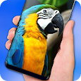 Parrot Live Wallpaper - HD icon