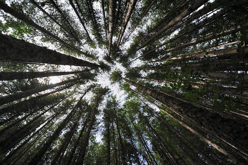 """Nel """"centro"""" del bosco!!! di leonardo valeriano"""