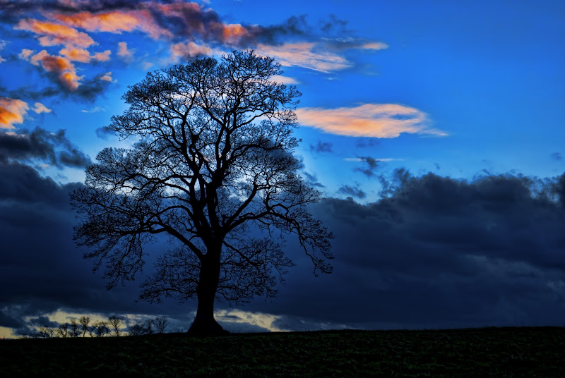 Photo: Silhouetted Tree