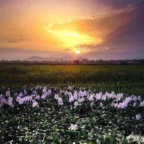 sunset by Arubam Meitei - Landscapes Prairies, Meadows & Fields ( green, field, nature, sunset, flower )