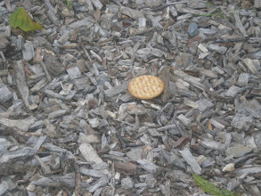 Photo: a ritz cracker - this one's for you mommy :-)
