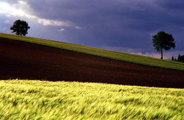 Geometrie in agricoltura di MWALTER