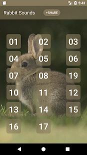 Králík a Bunny Sounds - náhled