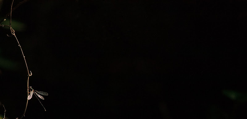 sola nel buio di adv