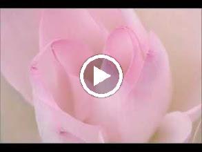 Video: Antonio Vivaldi  Sinfonia from the pasticcio 'Bajazet [Il Tamerlano]' (RV 703) -