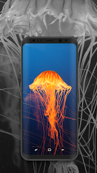 Wallpaper Expert - HD QHD 4K Backgrounds APK screenshot thumbnail 19