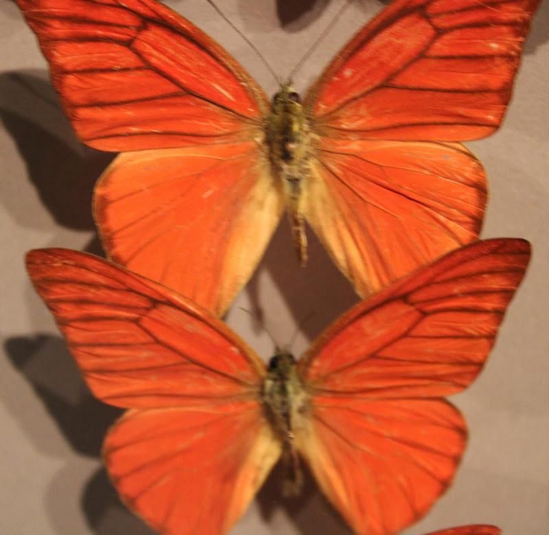 Farfalle  di annastolier