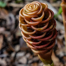 by Rob Whidden - Nature Up Close Other plants