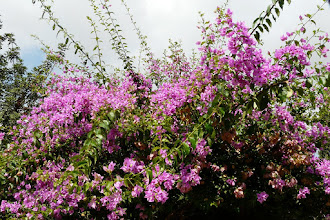 Photo: Bougainville