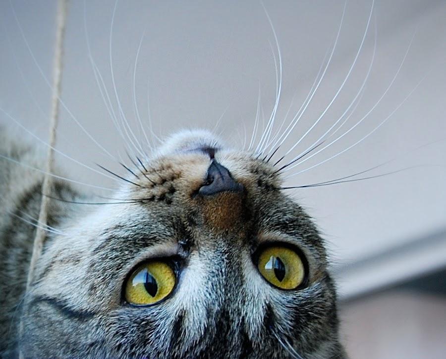 by Almasa Dalan - Animals - Cats Portraits