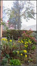 Photo: Crizanteme   din Turda - de pe Calea Victoriei,B15 - 2018.11.11