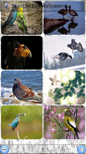 美しい鳥の壁紙