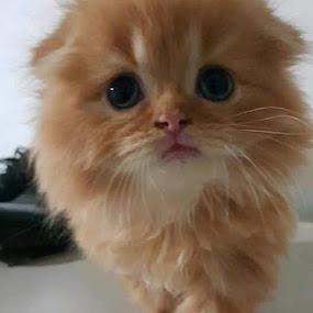 by Esterlin Wau - Animals - Cats Kittens ( cats, animals, mammal )